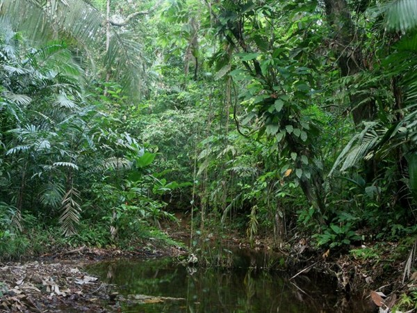 jungles2